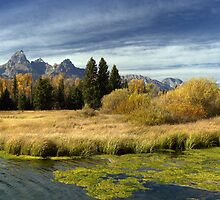Golden Marsh Grasses, Teton Panorama by A.M. Ruttle