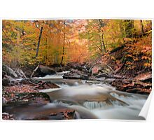 Glowing Fall Foliage Over Kitchen Creek Poster