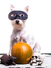 Happy Halloween Dog by Edward Fielding