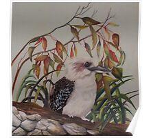 Laughing Kookaburra           Australia Poster