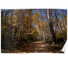 Cataloochee Forest Path Poster