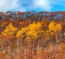 HDR Color Patterns Autumn by Jamie Roach