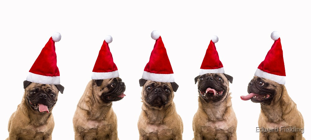 Seasons Greetings Pugs by Edward Fielding
