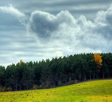 HDR Urney Trees Clouds by Jamie Roach