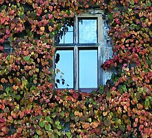 Autumn Panes by Yampimon