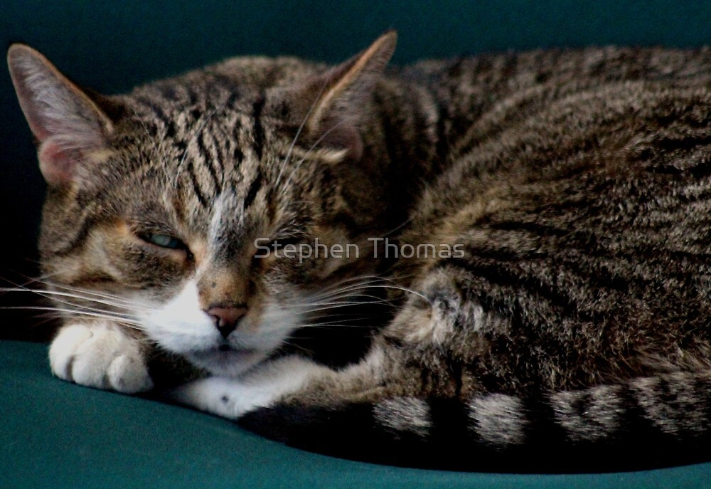 KEEP IT DOWN, I'M TRYING TO SLEEP by Stephen Thomas