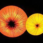 Color Splash by Rob Atkinson