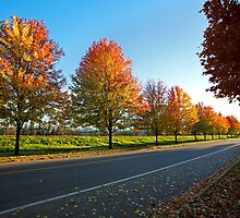 Autumn Maple Avenue Sussex by Jamie Roach