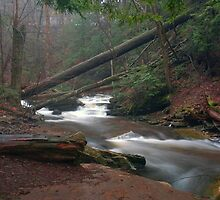 Moody Morning Mist Over Kitchen Creek by Gene Walls
