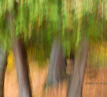 Trees - 13 - Impressions by Yannik Hay