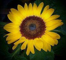 September Sunflower by Cheri Sundra