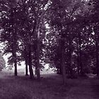 Woods, Bute Park Cardiff - Purple toned BW by Artberry