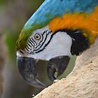 Parrot Likes His Tree by Chuck Coniglio