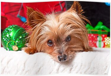 Christmas Yorkshire Terrier by susan stone