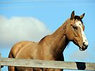 Tan Horse Blue Sky by Sandra Gray
