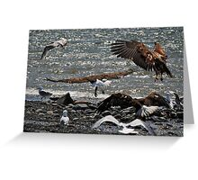 Bald Eagles Spirit Of The Wild Greeting Card