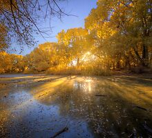 SwampFall by Bob Larson