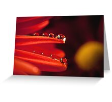 Dew drops Greeting Card