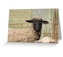 The day before the hurricane on the farm Greeting Card