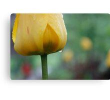Weathered tulip - Trondheim Canvas Print