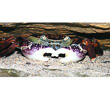 Crab   Royal National Park Australia Photographic Print