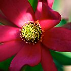 Red Leucadendron by Renee Hubbard Fine Art Photography