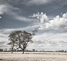 Two Trees - Tongala by Norman Repacholi