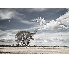 Two Trees - Tongala Photographic Print