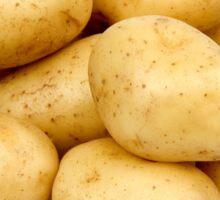 Just Potato's  Sticker