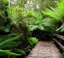 Ferns and Bridge. Henderson Creek. The Otways. by John Sharp