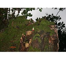 Finding the Leprechaun Photographic Print