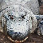 Big Croc by Amy Wilson