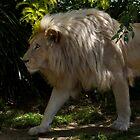 White Lion by Matt Hill