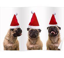 Christmas Pugs Trio Poster