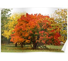 Autumn at its Best Poster