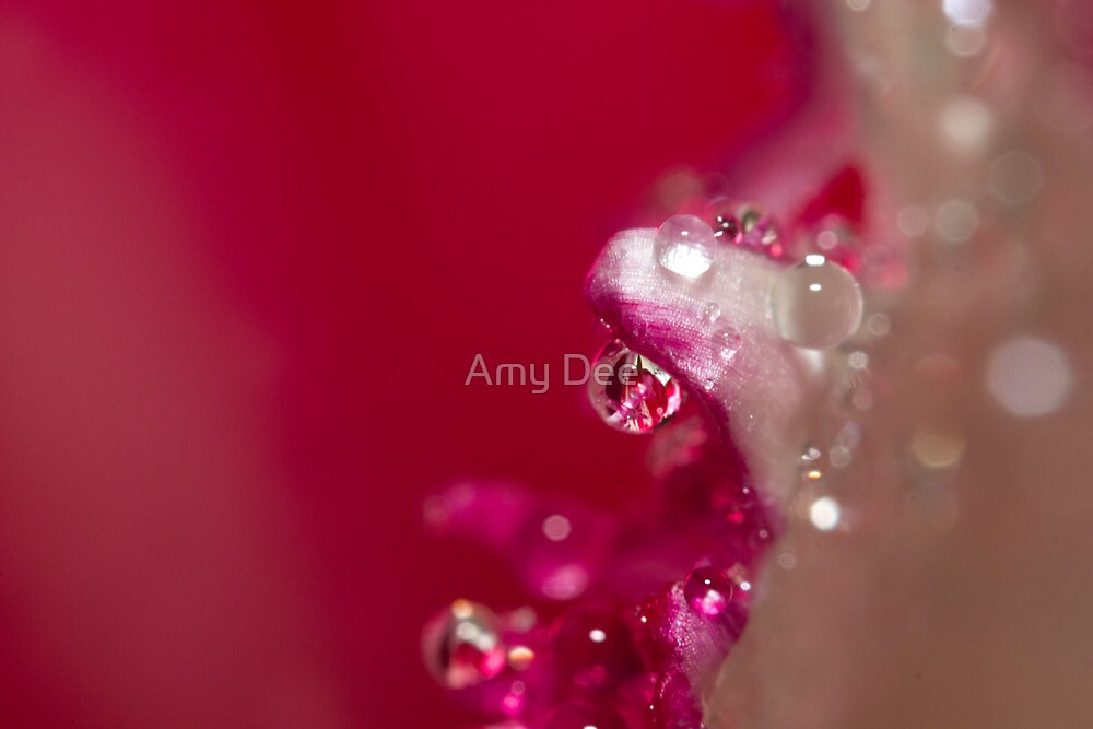 Jewel Crystal by Amy Dee