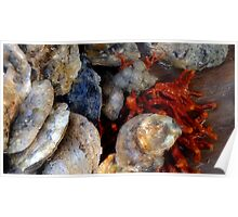 Oysters and Red Bearded Sponge Poster