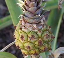 Baby Pineapple by ninthcircle