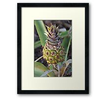 Baby Pineapple Framed Print