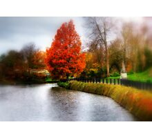 Autumn Tree in Tunbridge Wells  Photographic Print
