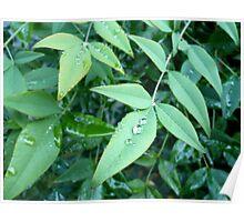 Rain on Leaves Poster