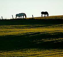 Horses Green Field Sun by Jamie Roach