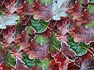 Frosted leaves by Anne Staub