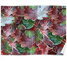 Frosted leaves Poster