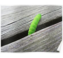 Green caterpillar on a wooden floor Poster