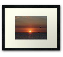 Birds gathering for sunset Framed Print