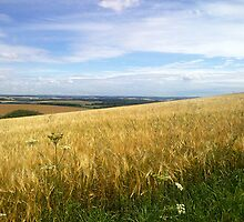 South Downs by Nina Fraser
