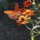 Butterfly by KJWH