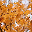 Maple Leaves by Jean Martin