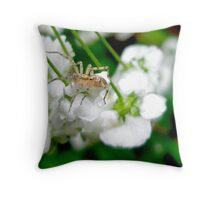 Ghost Spider and Spirea Blossoms Throw Pillow